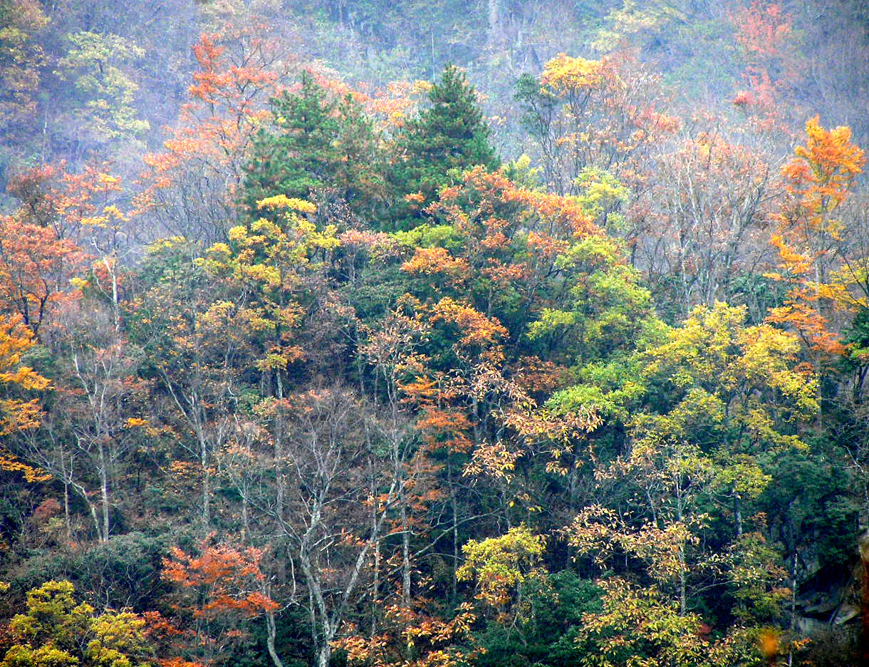 News Managing Forests